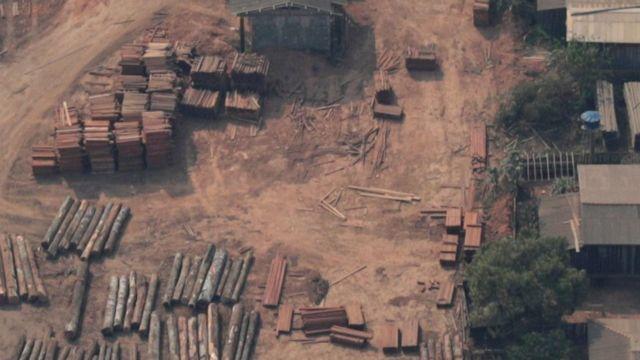 Imagme aérea de toras de madeira que foram extraídas ilegalmente
