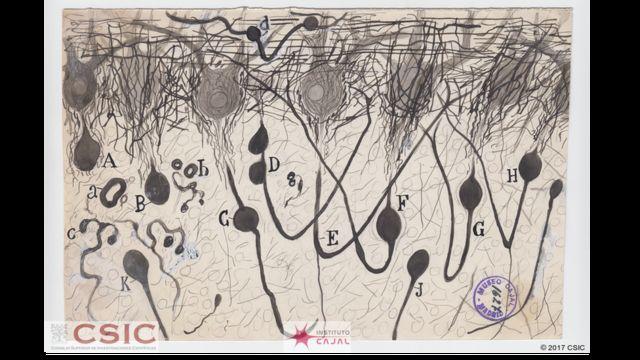 Dibujos de Santiago Ramón y Cajal
