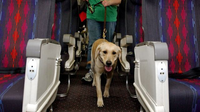 Perro guía en un avión.