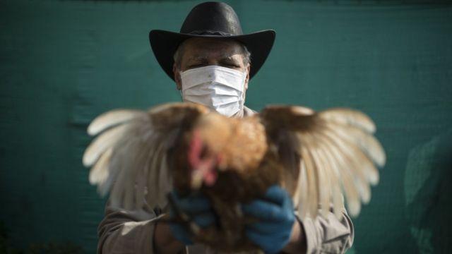 Chía, Colombia. Hombre con un gallo en los brazos y un barbijo