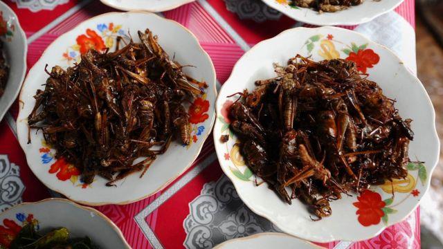Блюдо из насекомых