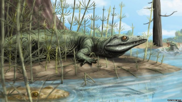 Fossil reptile discovery 'something extraordinary'