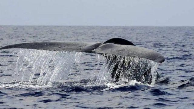 หางวาฬ