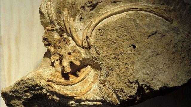 Huesos neandertales