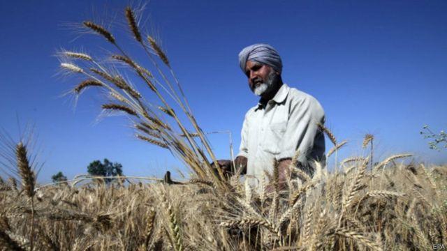 गेहूं की फसल के साथ किसान