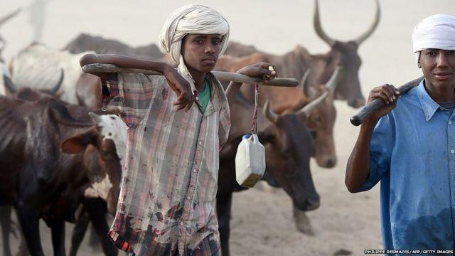 Nigeria Fulani herdsman with cattle