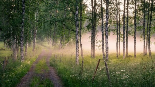 A forest with a footpath running across