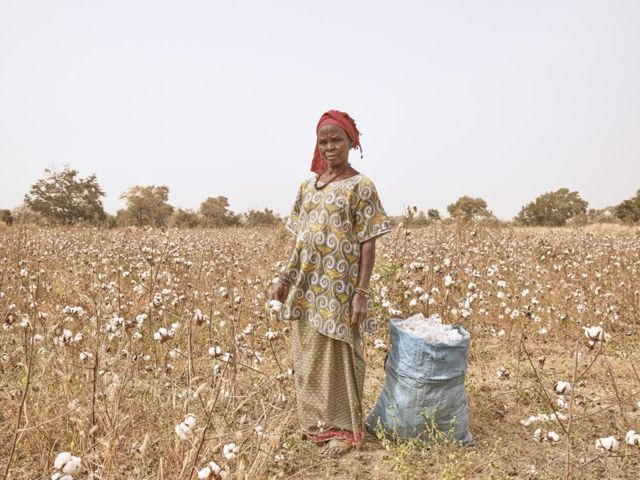 Adamo Diallo, productrice de coton