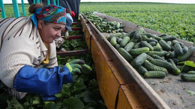 Белорусская экономика вряд ли существенно выиграет от интеграции, так как уже и так серьезно зависит от России
