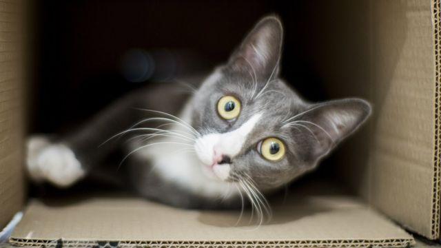 Un gato en una caja de cartón.