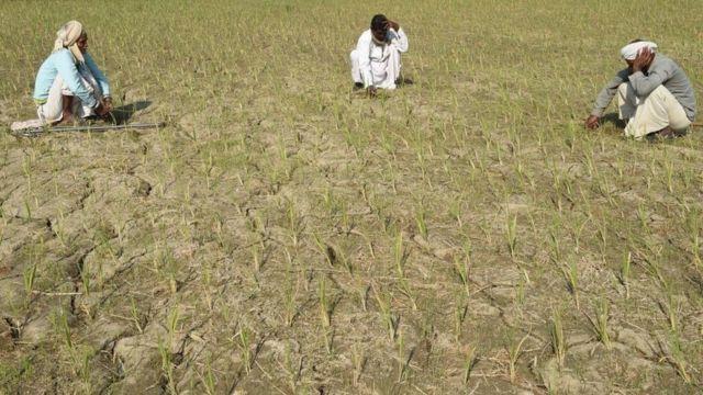 ખેતરમાં ખેડૂતો