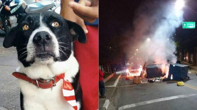 Cão Bob e protesto feito em Heliópolis