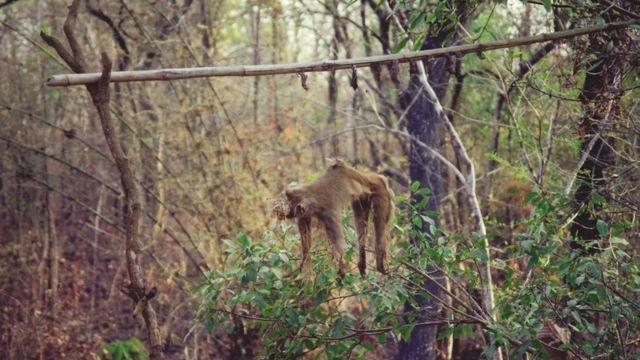 माकडाची शिकार