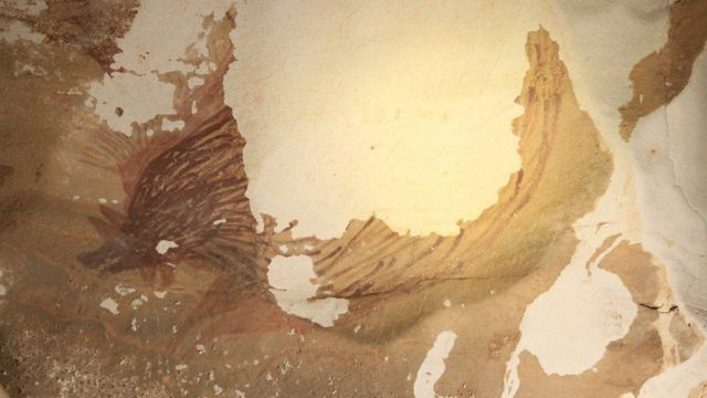 رسم لخنزير في أحد الكهوف