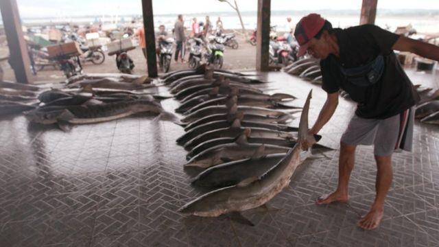 Perdagangan hiu