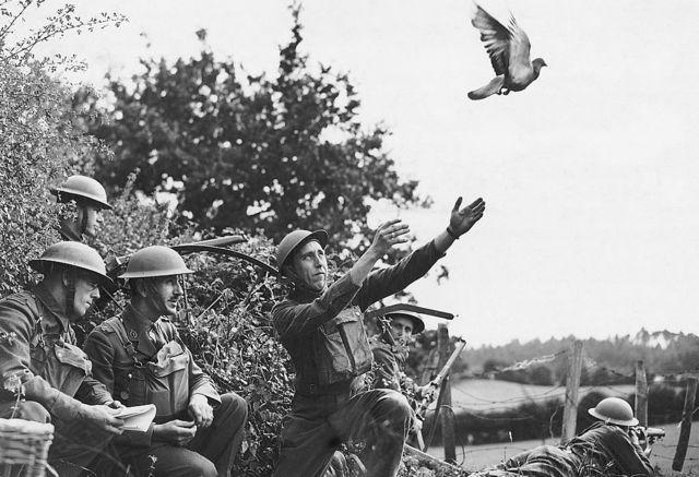 Members of the LDV (Local Defense Volunteers) in 1940 in the North West of England training homing pigeons.