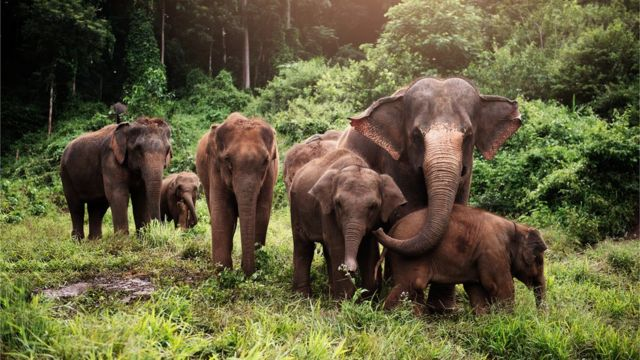 Seis elefantes