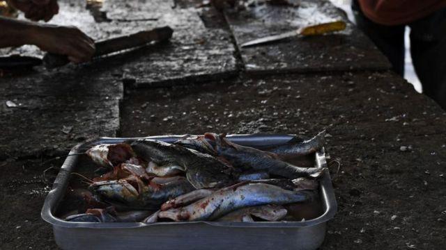 La contaminacion esta afectando a los animales de consumo humano.