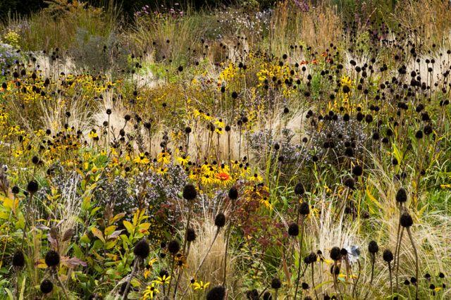 Prairie Plantation by Volker Michael