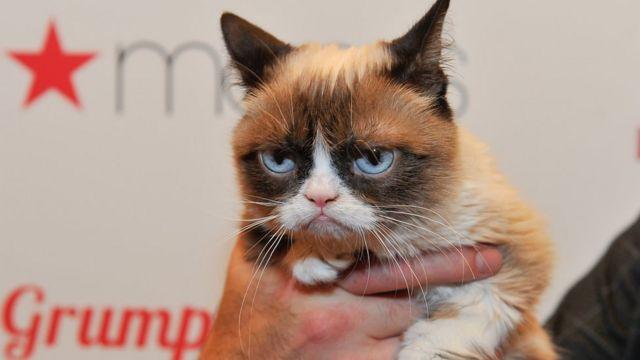 В русскоязычном сегменте интернета американская кошка тоже очень популярна, ее называют то грустной, то сердитой, то мрачной, то хмурой, а иногда и просто Грампи Кэт
