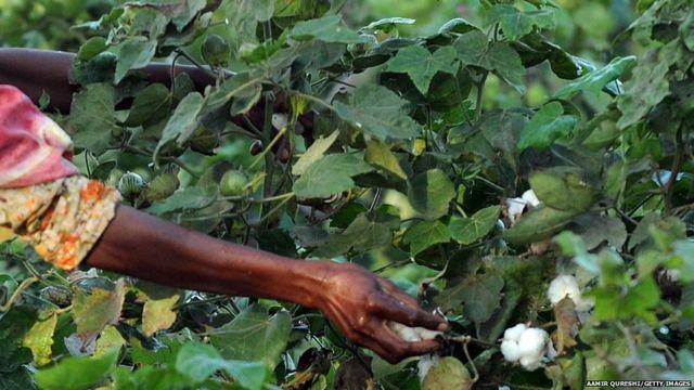 ਕੀਟਨਾਸ਼ਕਾਂ ਦੇ ਛਿੜਕਾਅ ਦੌਰਾਨ ਮਹਾਰਾਸ਼ਟਰਾ 'ਚ 30 ਕਿਸਾਨਾਂ ਦੀ ਮੌਤ