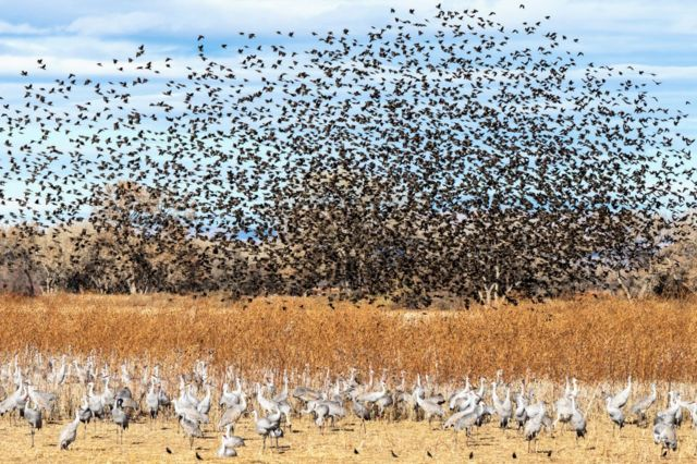 Sabe-se que 118 espécies de aves fazem a migração norte-sul nas Américas