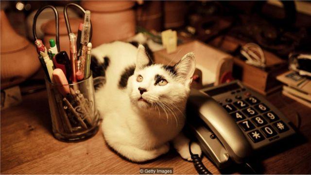 Gato em cima da mesa