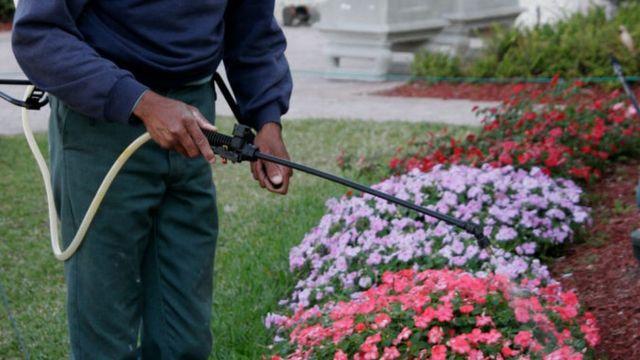Un jardinero utiliza el herbicida en un jardín de Florida. Estados Unidos.