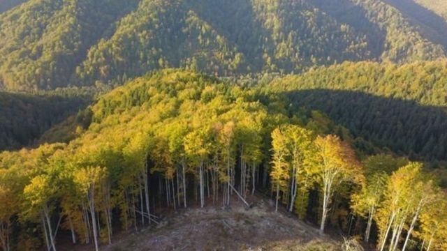 रोमेनिया जंगल