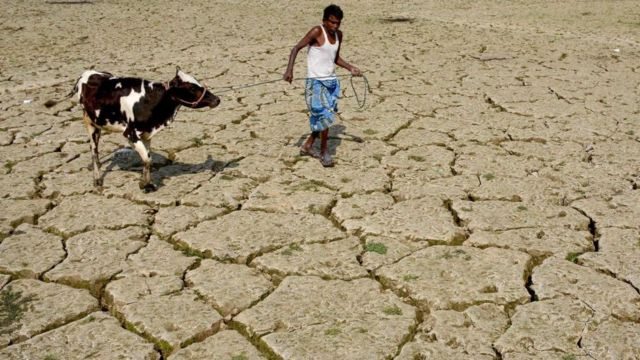 A man walking with his cow in India over a dried out paddy field