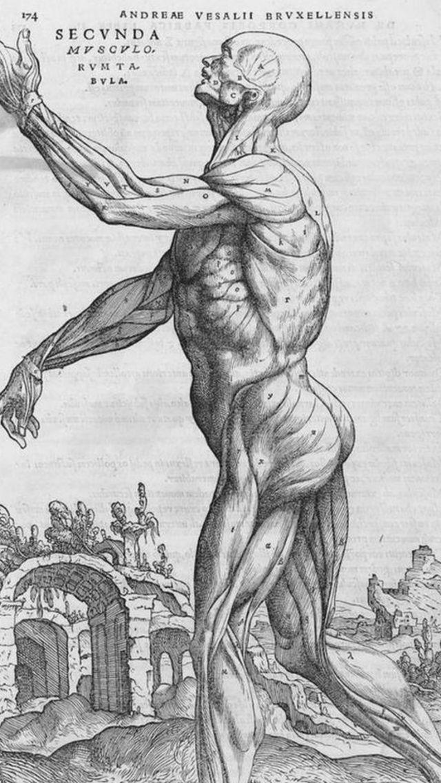 libro de anatomía.