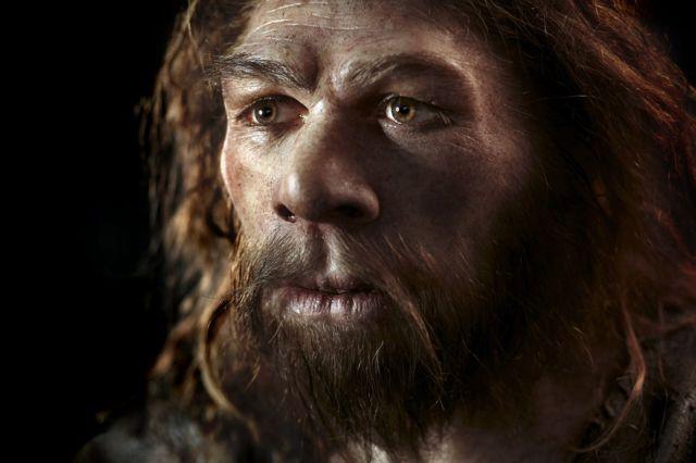 Neanderthal model. Reconstruction of a Neanderthal (Homo neanderthalensis)