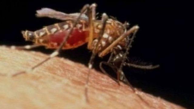 Sauro ne ke haddasa cutar malaria