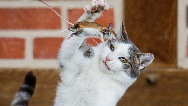 Fur flies over New Zealand cat ban