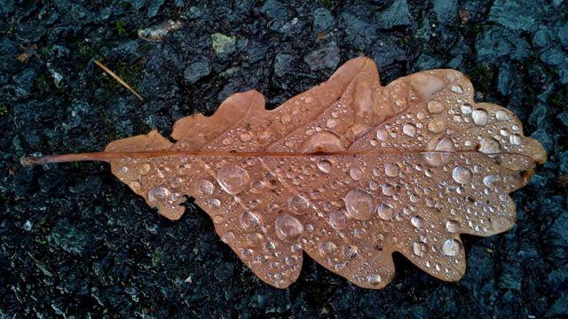 Hoja con gotas de agua en el suelo del bosque