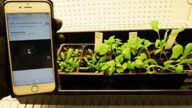 बारूदी सुरंग की पहचान करेगा पालक का पौधा