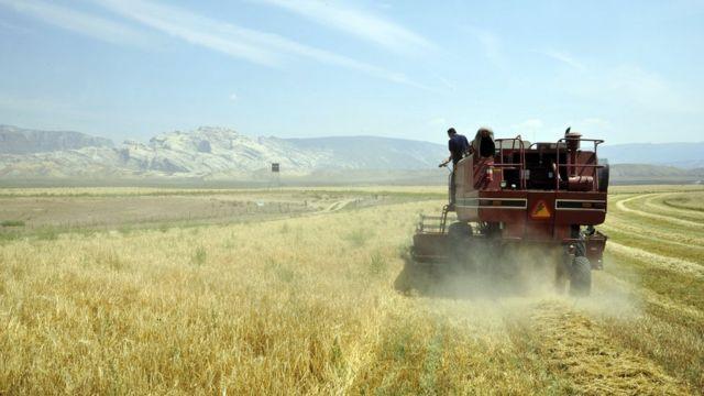 美国犹他州詹森市的艾斯克兰迪农场正在收割燕麦。