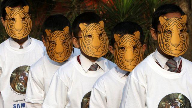 เนปาลดำเนินยุทธศาสตร์ ฟื้นฟูประชากรเสือ นับแต่ปี 2009