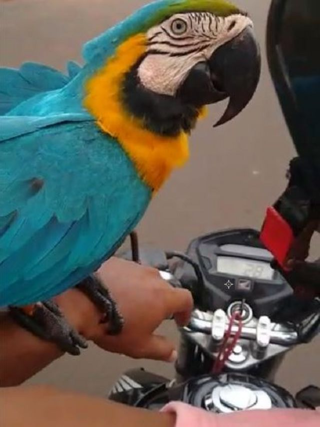 Duda em moto com Eduardo