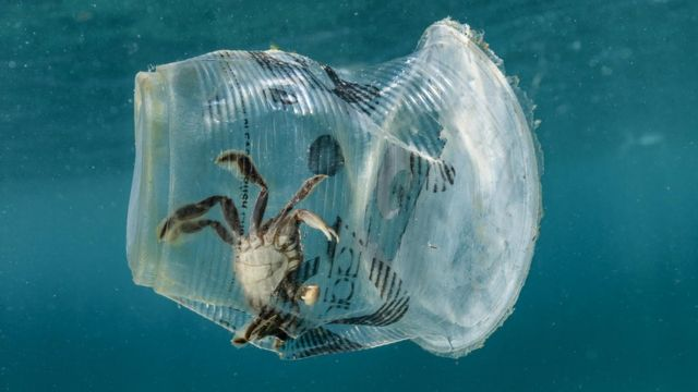 Plastik stəkanda xərçəng