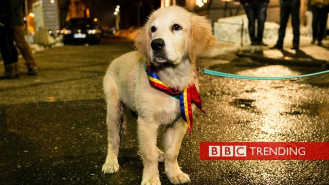 Dog at Romanian protest