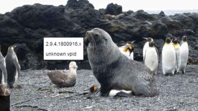 Durwan teku ''Seal'' da tsuntsayen Penguins