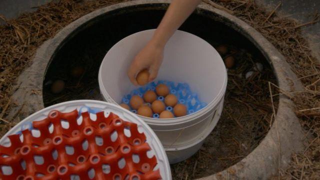 Huevos caseros de la familia Watkinson.