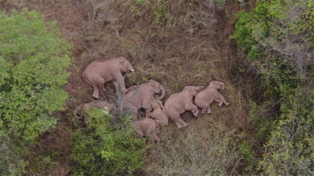 Спящие слоны