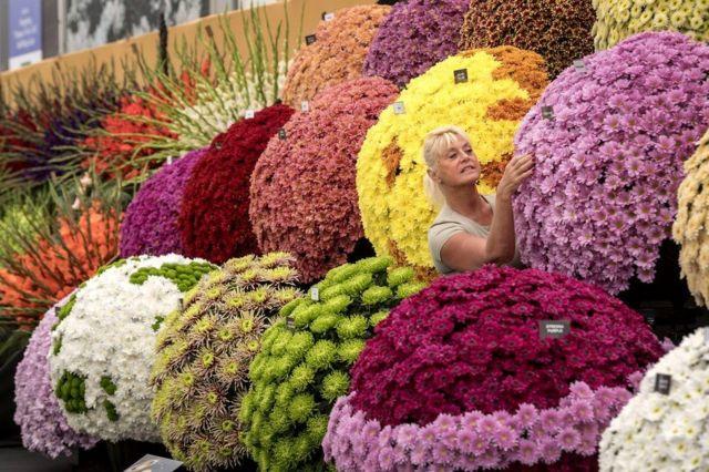 Seorang pekerja merapikan tampilan bunga di RHS Chelsea Flower Show tahun ini di London.