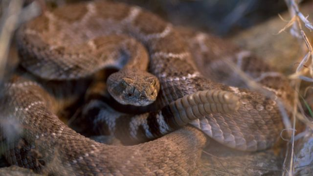 Texas man nearly dies after being bitten by severed snake head