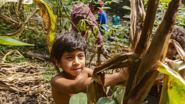 Menino em roça de milho consorciada com mandioca em aldeia da TI Tenondé Porã