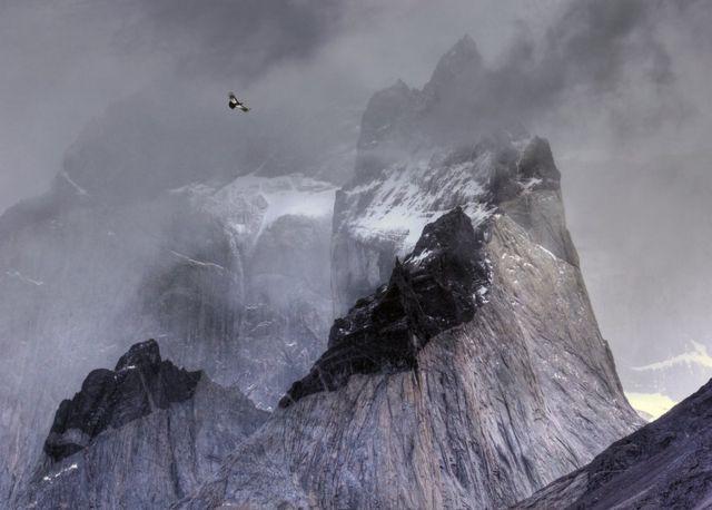 نسر يحلق فوق جبل
