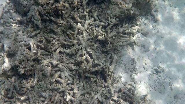 ปะการังในอ่าวมาหยา ยังอยู่ในสภาพน่าเป็นห่วง