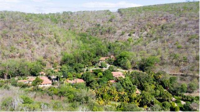 Một khu trồng rừng cạnh trụ sở Instituto Terra